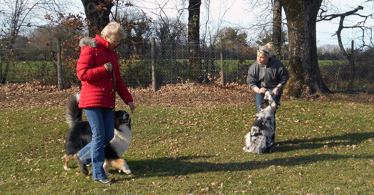 Le croisement avec un autre chien